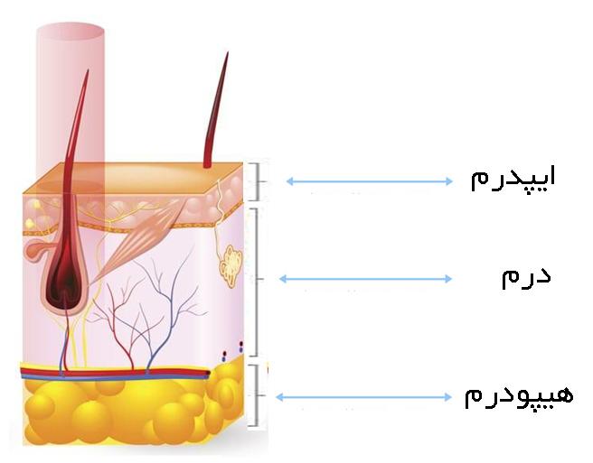 تاثیر لیزر روی باروری و غدد لنفاوی